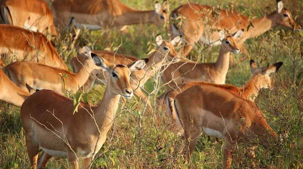 Bardia safari